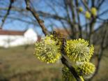 včelky na jaře