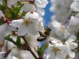 včelky na stanovišti